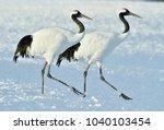 dancing cranes. the red crowned ...   Shutterstock . vector #1040103454