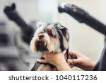 female groomer haircut... | Shutterstock . vector #1040117236
