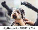 female groomer haircut... | Shutterstock . vector #1040117236