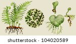 Fern Biological Cycle...
