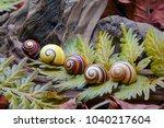 snails   cuban land snail ... | Shutterstock . vector #1040217604