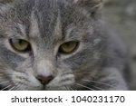 feline face   close up view | Shutterstock . vector #1040231170