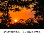 silhouettes of tre branches on... | Shutterstock . vector #1040264956