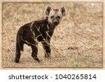 hyena puppy close up in a sun... | Shutterstock . vector #1040265814