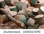 stumps of felled trees  felled... | Shutterstock . vector #1040317690