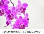 beautiful rare orchid in a pot... | Shutterstock . vector #1040323999