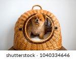 sweet lovely adorable new born... | Shutterstock . vector #1040334646