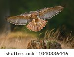 flying bird of prey  red tailed ... | Shutterstock . vector #1040336446