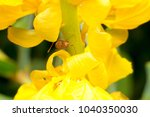 sunflower and insect   Shutterstock . vector #1040350030