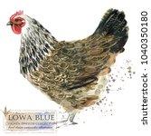 Lowa Blue Hen. Poultry Farming...