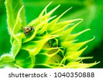 sunflower and insect   Shutterstock . vector #1040350888