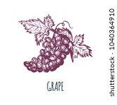 hand drawn grape on white... | Shutterstock .eps vector #1040364910