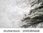 grey heron  ardea cinerea  in...   Shutterstock . vector #1040384668