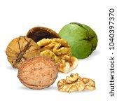 fresh  nutritious  tasty walnut....   Shutterstock .eps vector #1040397370