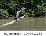 great cormorant  phalacrocorax... | Shutterstock . vector #1040411158