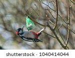 great spotted woodpecker... | Shutterstock . vector #1040414044
