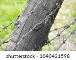 barbed wire fence | Shutterstock . vector #1040421598