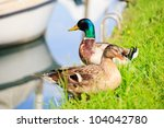 photo of ducks  taglio river in ... | Shutterstock . vector #104042780