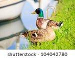 photo of ducks  taglio river in ... | Shutterstock . vector #104042780