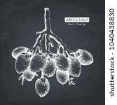 vector areca palm illustration. ... | Shutterstock .eps vector #1040438830