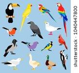 Stock vector vector bird icon collection tropical birds collection parrots and toucan vector design isolated 1040447800