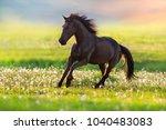 black horse with long mane run... | Shutterstock . vector #1040483083