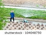 Thai Agricultural in Thailand - stock photo