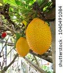 Small photo of Gac fruit, tropical fruit rich of vitamin and anti oxidant, ripe gac fruit rich n farm