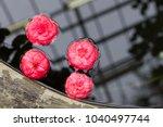 Fallen Pink Camellia Japonica...