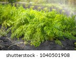 green fresh background  carrots ... | Shutterstock . vector #1040501908
