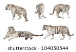 Set Of White Tiger. Isolated ...