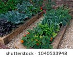 small edible vegetable garden... | Shutterstock . vector #1040533948