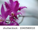 orchid flower blossom | Shutterstock . vector #1040580010