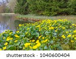 spring background with yellow   ... | Shutterstock . vector #1040600404