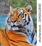 the amur or ussuri tiger  or... | Shutterstock . vector #1040612830