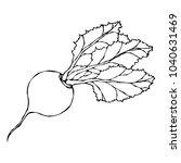 ripe beet. beetroot with top... | Shutterstock .eps vector #1040631469