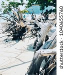 tree roots on the beach. | Shutterstock . vector #1040655760