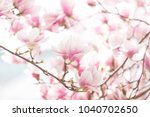 Spring Background With Blooming ...