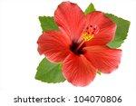 blossoming red flower of... | Shutterstock . vector #104070806