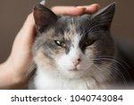 woman hand stroking happy... | Shutterstock . vector #1040743084
