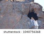 common kestrel  falco...   Shutterstock . vector #1040756368