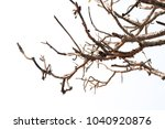 Dry Limb On Isolated On White...
