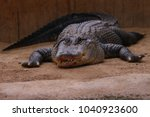 american alligator  in ballarat ... | Shutterstock . vector #1040923600
