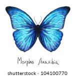 butterfly morpho anaxibia.... | Shutterstock .eps vector #104100770
