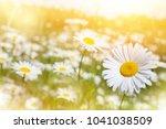 summer landscape. summer... | Shutterstock . vector #1041038509