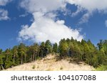 Coniferous Trees On High...