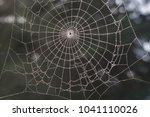 Spider Network  Forest