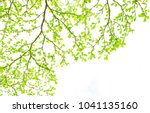 green fresh leaves on white... | Shutterstock . vector #1041135160