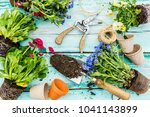 the first spring colorful... | Shutterstock . vector #1041143899