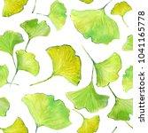 leaves of ginkgo bilboa....   Shutterstock . vector #1041165778